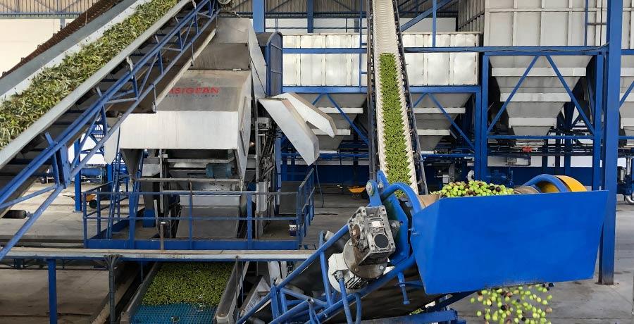 La reducción de hidrocarburos garantiza la seguridad alimentaria en almazaras